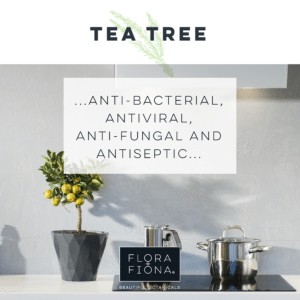 "IN a bright kitches, a miniature lemon tree stands on a worktop beside two saucepans on a hob. Superimposed text reads: ""Tea Tree: anti-bacterial, anti-viral, anti-fungal and antiseptic."""